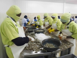 Ecuador: A look at Songa shrimp processing and farming operations