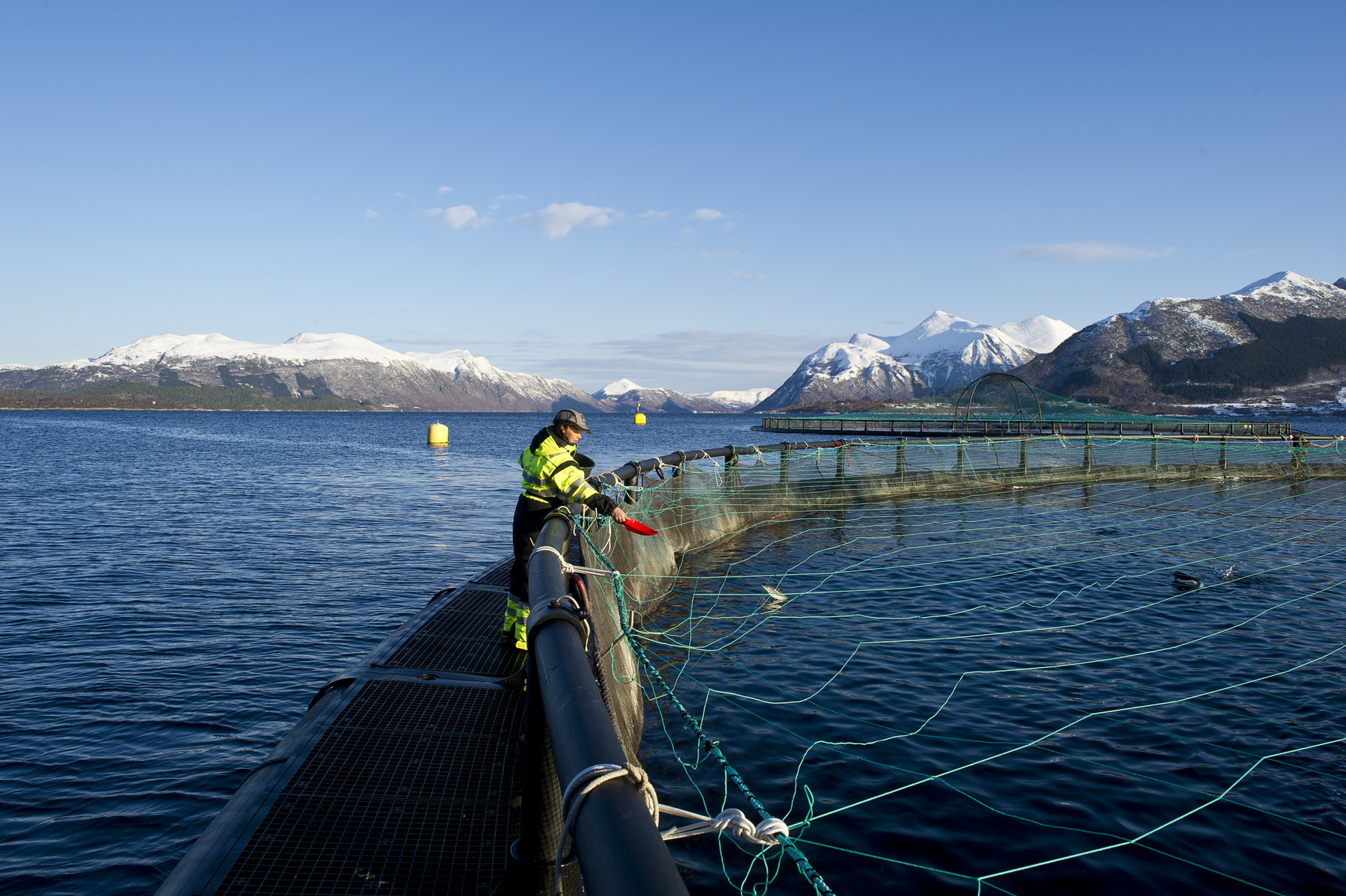 Marine Harvest salmon farm
