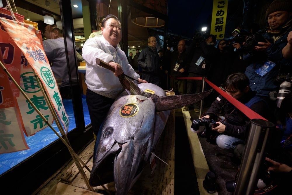 Tokyo Giant Tuna Auction Draws $632K Bid