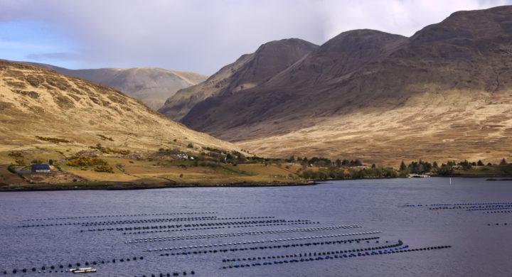 Aquaculture farm in Ireland. Credit: shutterupeire/Shutterstock.com