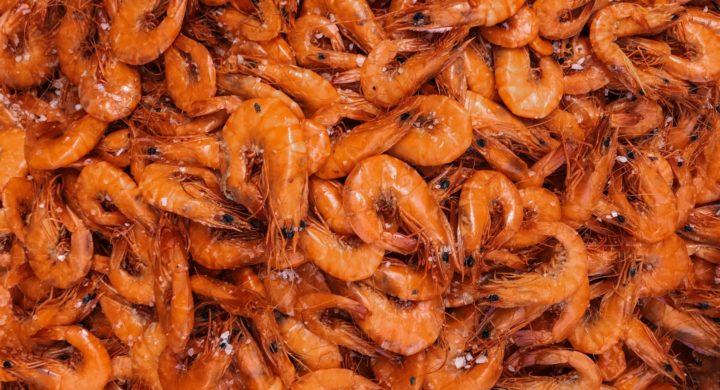 Argentine red shrimp 'selling like crazy' in US market