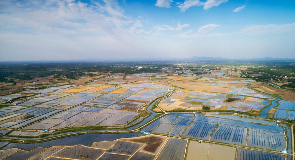 Chinese Shrimp Farm